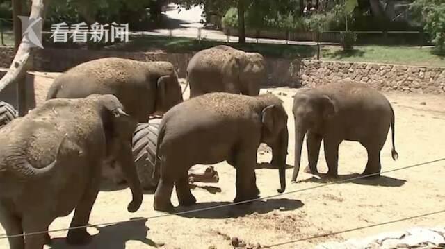 以色列防空警报响起 数头大象围成一圈保护小象插图4