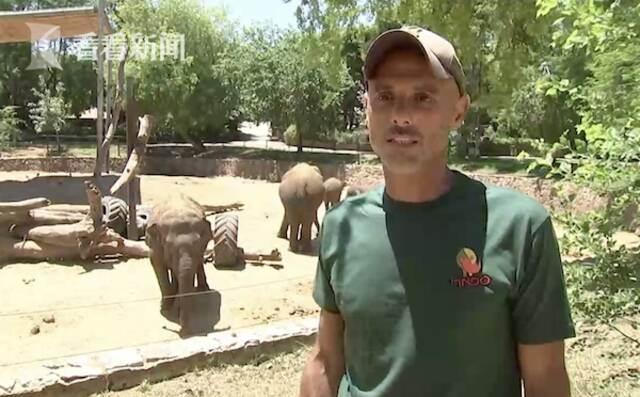 以色列防空警报响起 数头大象围成一圈保护小象插图2