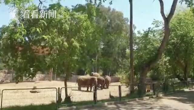 以色列防空警报响起 数头大象围成一圈保护小象插图