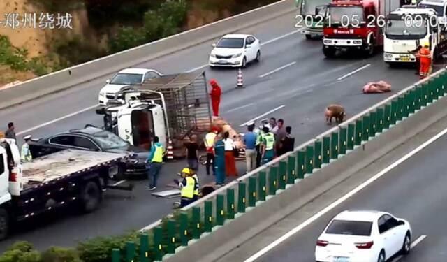 30头猪大闹郑州绕城高速 3人受伤 车辆排队5公里插图6